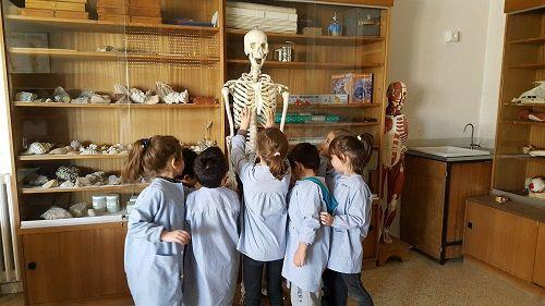 esquelet arrels 1